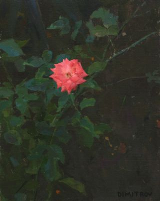 Martin Dimitrov - The Forgotten Rose